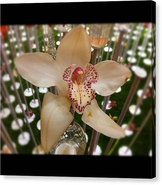 Orchids Canvas Print - Good Night / Good Day Igers! by Ji Lyn Ho