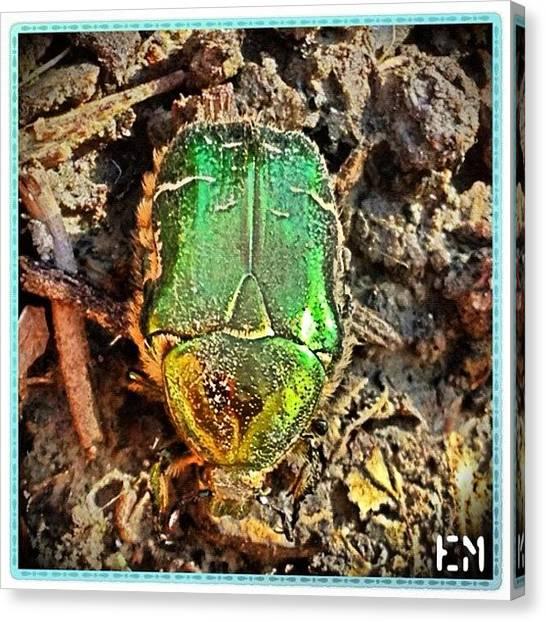 Beetles Canvas Print - #good_luck #switzerland #beetle by Mr Etso