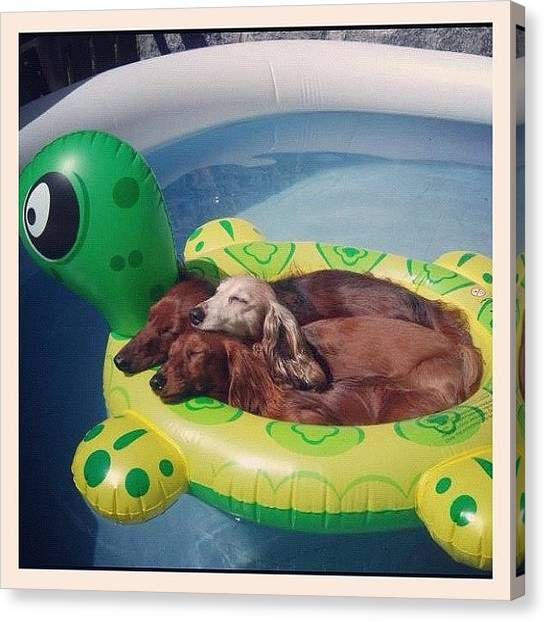 Hot Dogs Canvas Print - Goodmorning Everyone! ☀🐶☀ #pool by Myrtali Petrocheilou