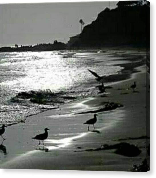 Seagulls Canvas Print - #goodnight #beach #water #waves by Mary Carter