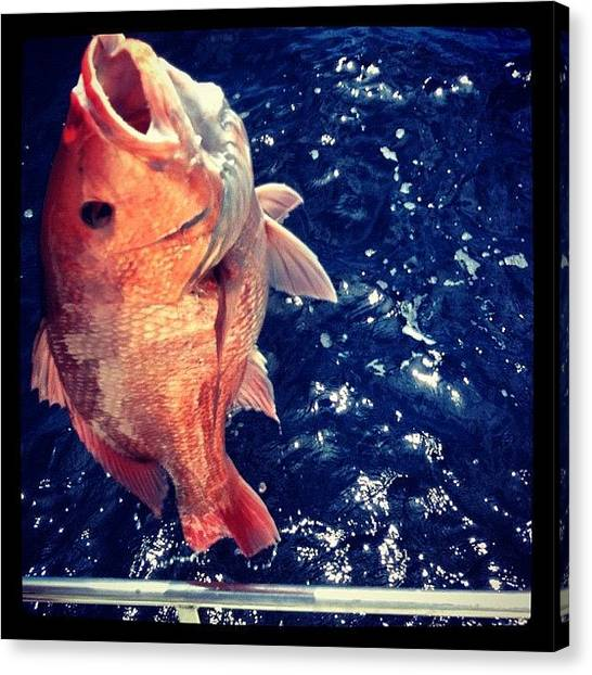 Seafood Canvas Print - Gorgeous (and #yummy) #redsnapper by Molly Slater Jones