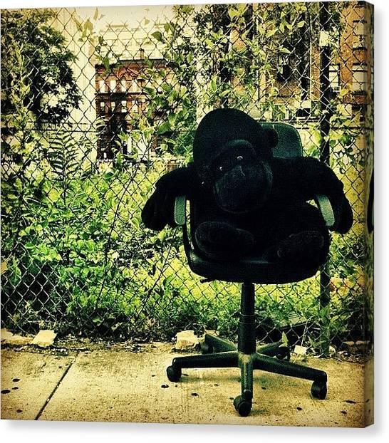 Gorillas Canvas Print - Gorilla Watches Over His Urban Jungle by Luke Kingma
