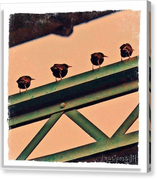 Tennessee Canvas Print - Gossip by Mari Posa