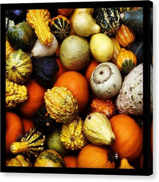 Still Life Canvas Print - Gourds by Travel Designed