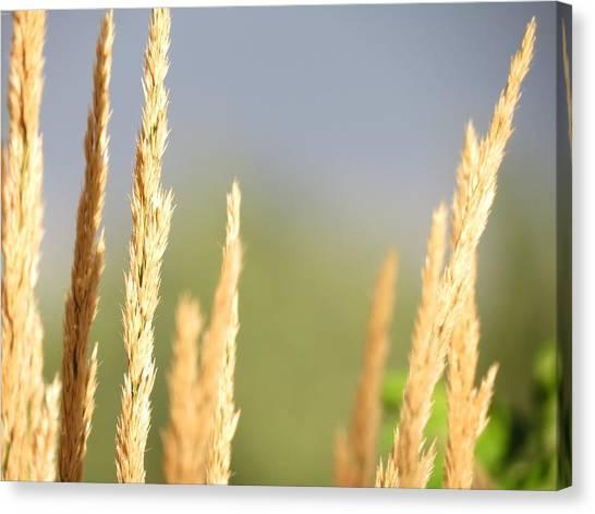 Grain Canvas Print by Don Barnes