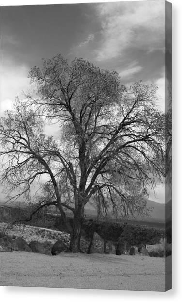 Grand Canyon Life Tree Canvas Print