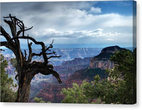 Grand Canyon North Rim After A Storm Canvas Print by C Thomas Willard