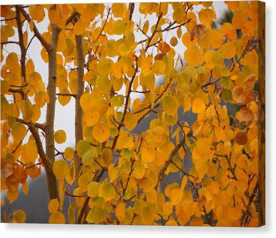 Grand Lake Aspen Canvas Print