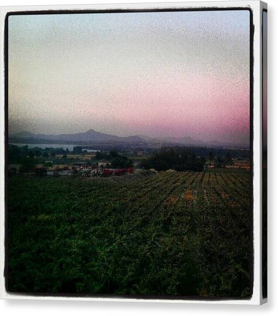 Grapes Canvas Print - Grape Vineyards, Pink Sky, Hills And A by Samay L