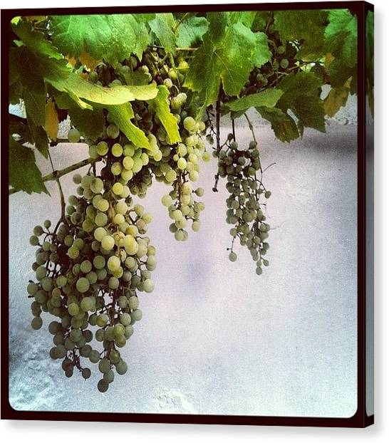 Grapes Canvas Print - #grapes, #green, #wall, #white by George sneyeper Vlachos
