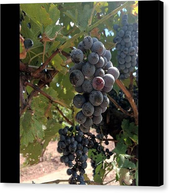 Winery Canvas Print - #grapes #winery #buckscounty #pa by Cai King-Young