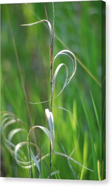 Grass Calligraphy I Canvas Print