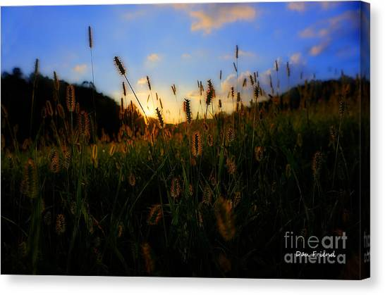 Grass In Field At Sunset Canvas Print by Dan Friend