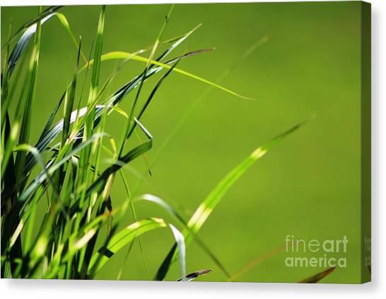 Grass Is Always Greener Canvas Print