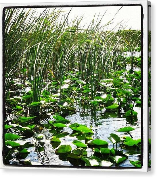 Swamps Canvas Print - #grass #lillypads #florida #everglades by Michael Hughes