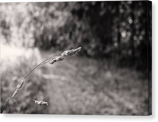 Grass Over Dirt Road Canvas Print