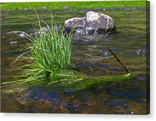 Grass Rock Stick Canvas Print