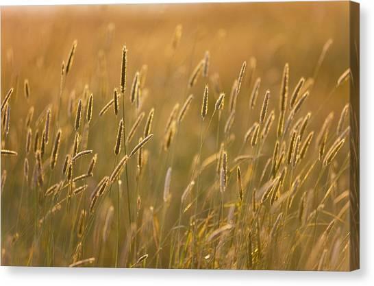 Newfoundland And Labrador Canvas Print - Grass by Sean White