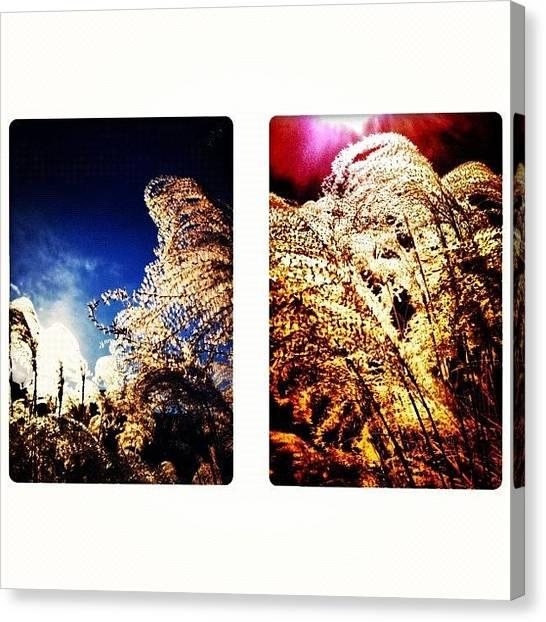 Sun Canvas Print - Grasses In The Sun by Paul Cutright