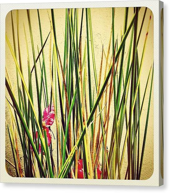 Scenic Canvas Print - Grasses by Julie Gebhardt