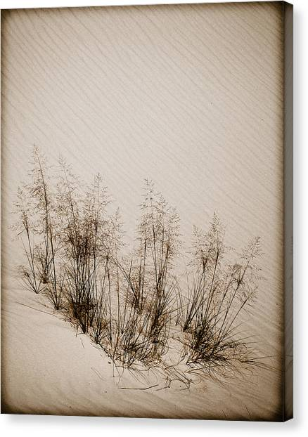 White Sands, New Mexico - Grasses Canvas Print