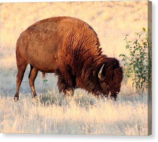 Grassland Giant Canvas Print by Bob Bahlmann