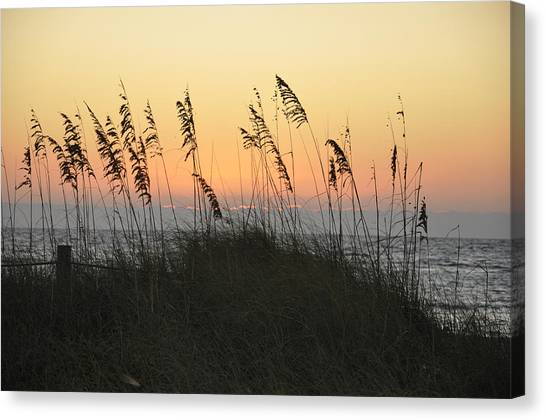 Grassy Sunset Canvas Print