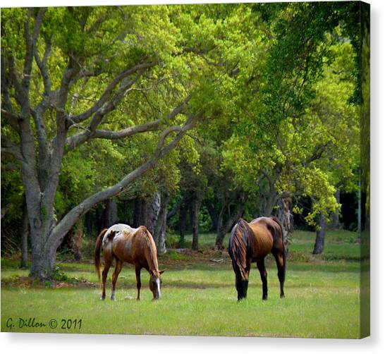 Grazing Pair Of Horses Canvas Print