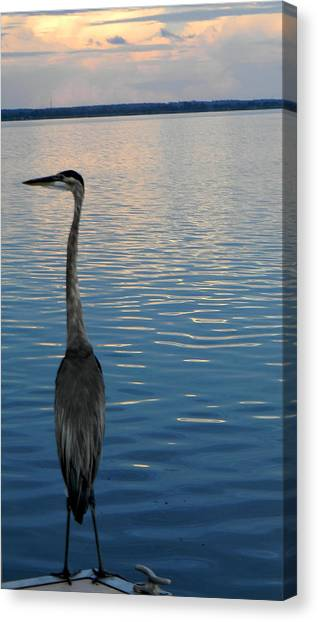 Great Blue Dusk Canvas Print by Christy Usilton