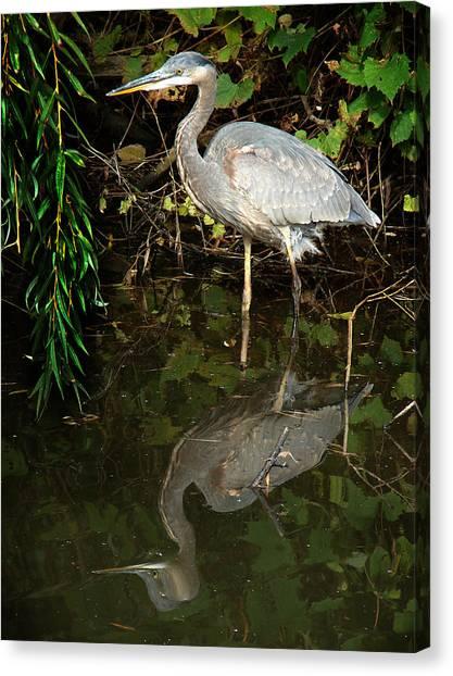 Great Blue Heron 1 Canvas Print