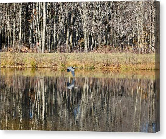Great Blue Heron In November Canvas Print