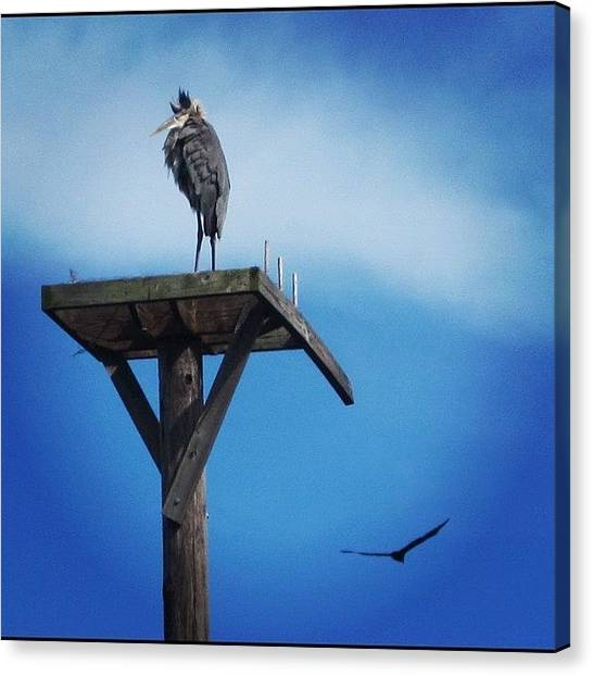 Vultures Canvas Print - #great #blue #heron On A #pole #flying by Michael Hughes