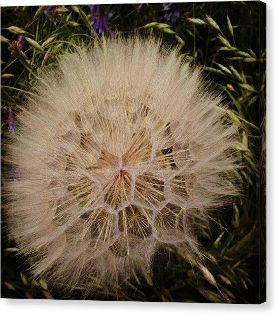 Outer Space Canvas Print - #great #day For #natural #wild #flowers by Alien Alice