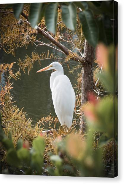 Great Cypress Canvas Print - Great Egret  In Cypress by Patrick M Lynch
