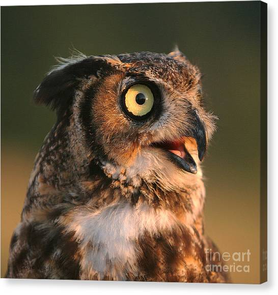 Great Horned Owl Canvas Print by Clare VanderVeen