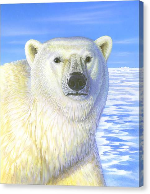 Great Ice Bear Canvas Print