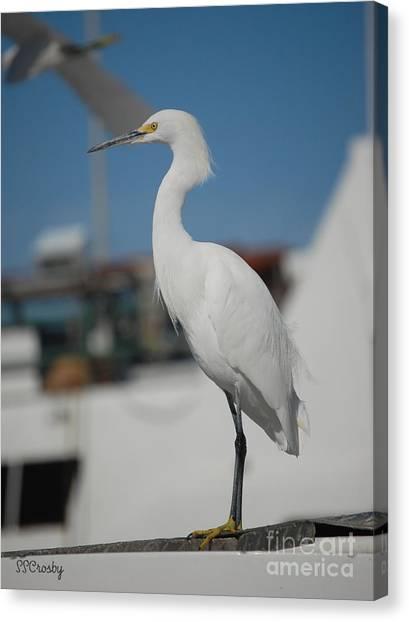 Great White Egret 2 Canvas Print