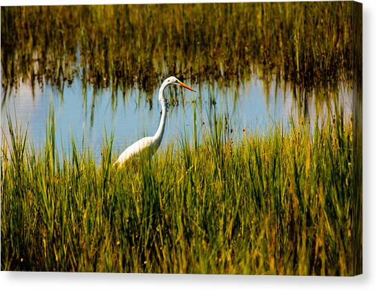 Greater Egert Canvas Print by Michael Ray