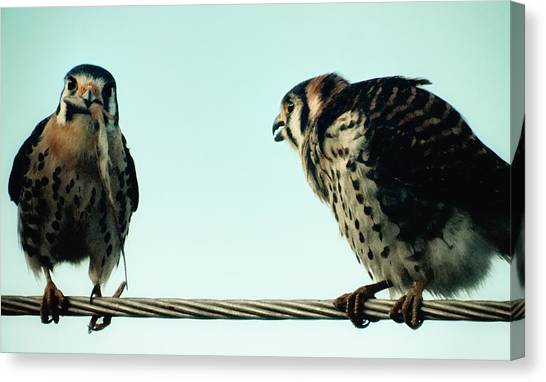 Greedy Bird Canvas Print