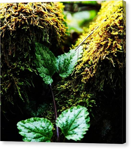 Green Canvas Print - #green # Plants #nature #country by Ritchie Garrod