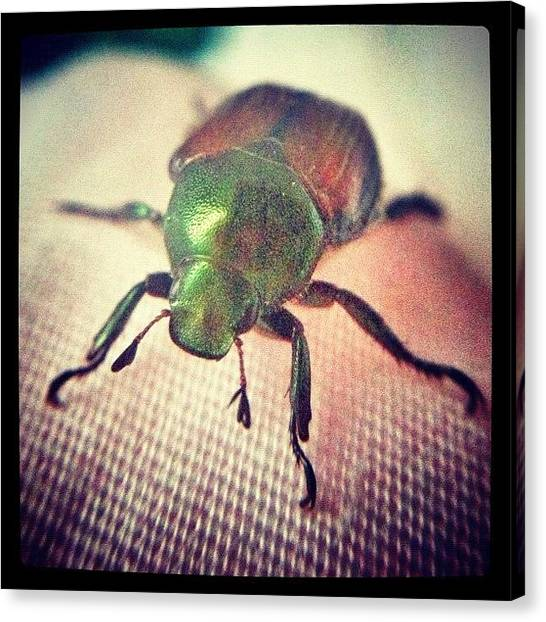 Insects Canvas Print - Green by Dave Edens