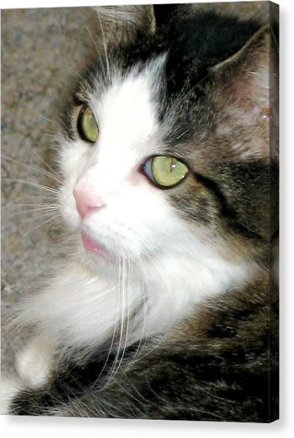 Green-eyed Cat Canvas Print by Inga Smith