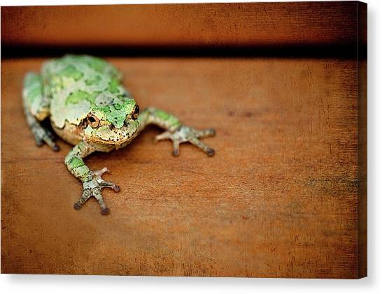 Frogs Canvas Print - Green Frog With Gold Rimmed Black Eyes by R. Nelson