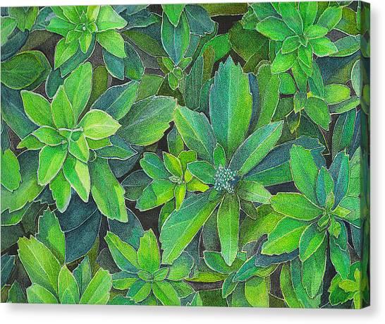 Green Gold Canvas Print by Yvonne Scott