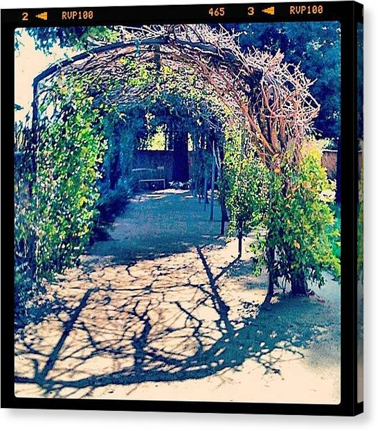 Snowboarding Canvas Print - #green #grape #arbor by Anna Porter