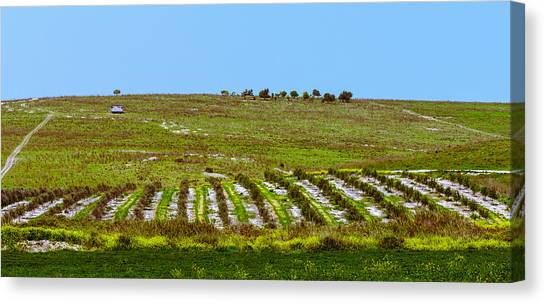 Green Hills Canvas Print