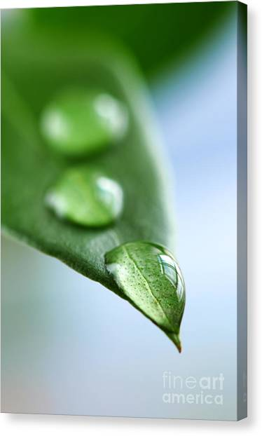 Leaves Canvas Print - Green Leaf With Water Drops by Elena Elisseeva