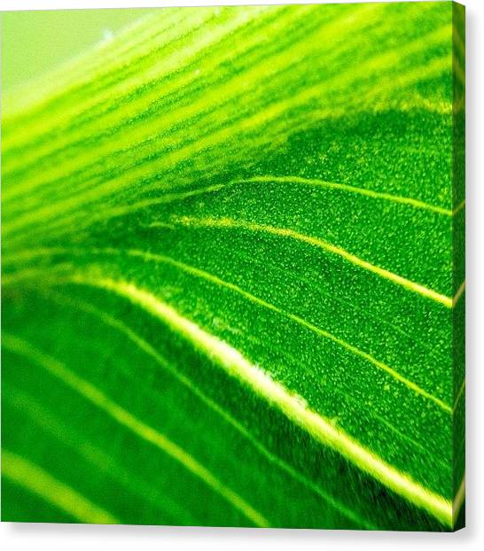 Plant Canvas Print - Green Life by Christopher Campbell