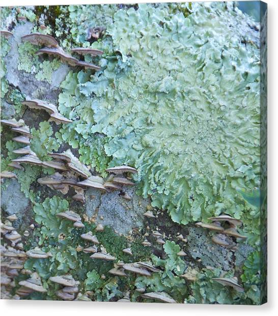 Green Mossy Fungus Party Canvas Print