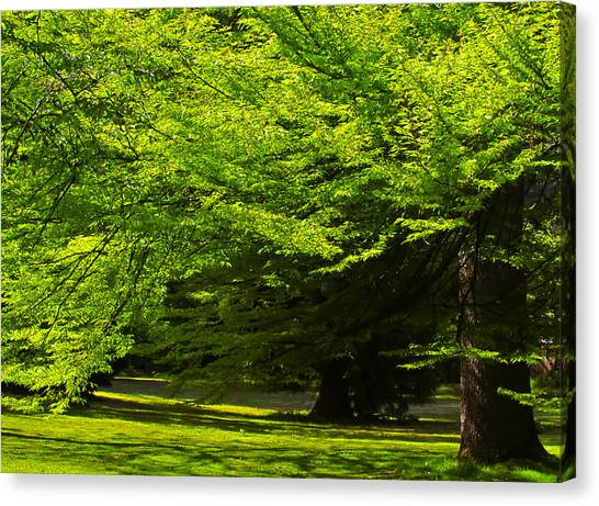 Green Trees In Stanley Park Canvas Print